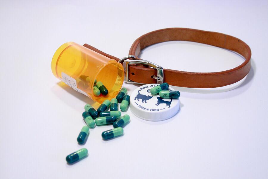 Coleira e comprimidos para desparasitação