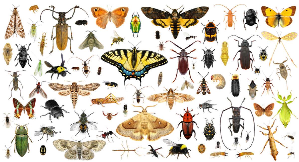 Os insetos são animais sem ossos.