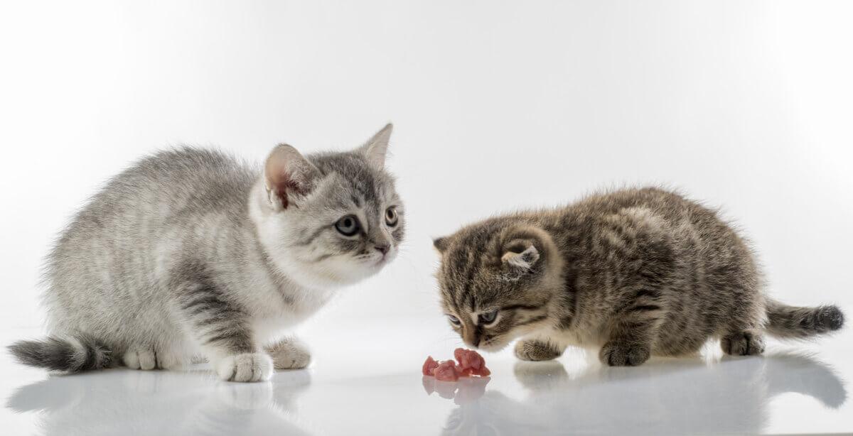 Como melhorar a convivência de vários gatos?
