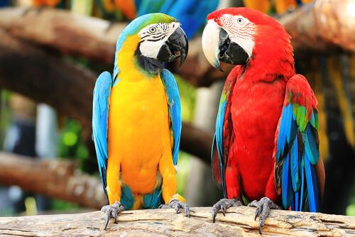 Papagaios, companheiros divertidos