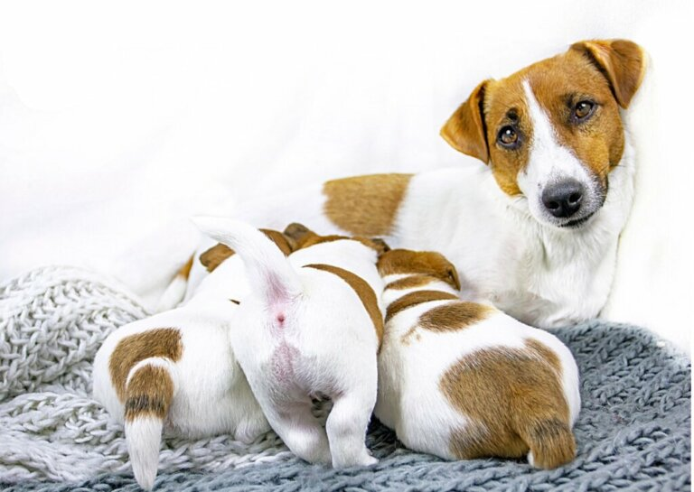 5 dicas para desmamar filhotes de cachorro