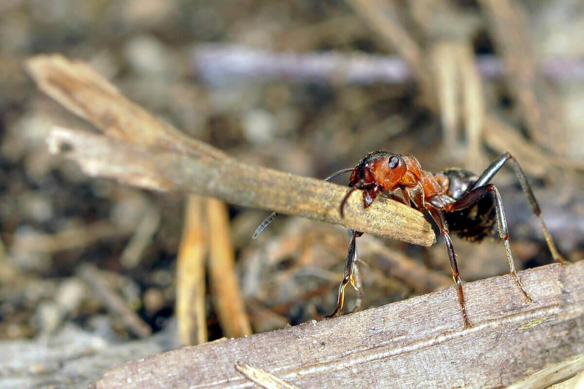 O comportamento das formigas.