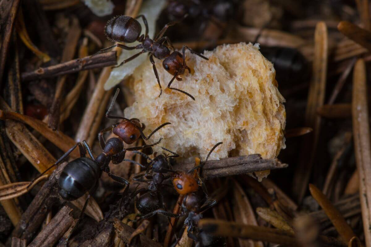 Existem muitos mecanismos de defesa nas formigas.