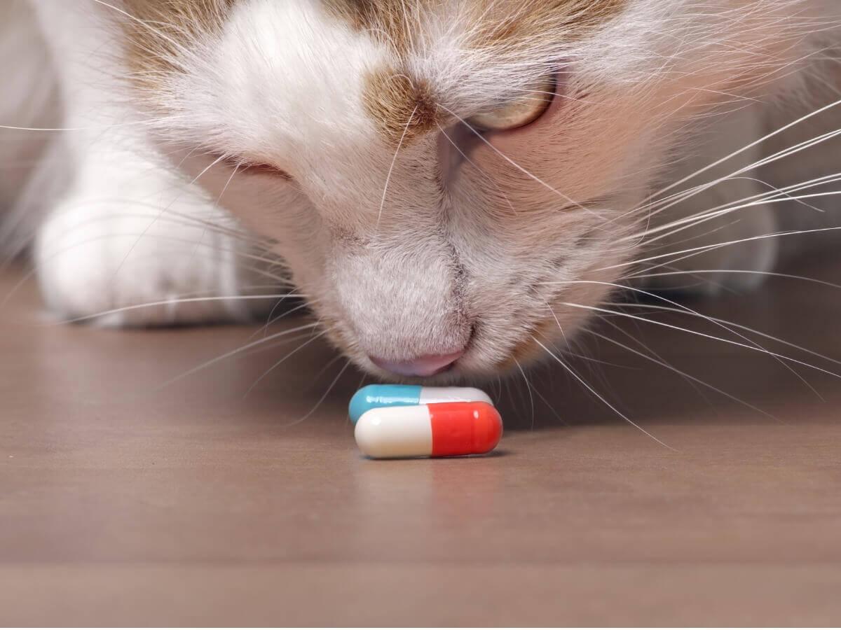 Um gato cheirando pílulas.