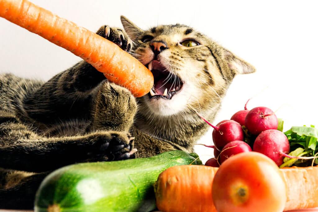 As dietas veganas para animais de estimação não são completas, segundo os especialistas