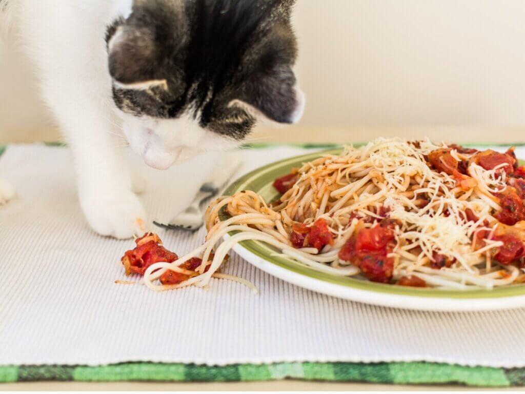Os gatos podem comer massas?