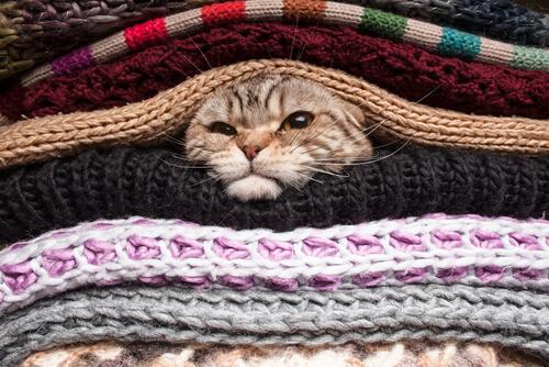 Gato com frio.
