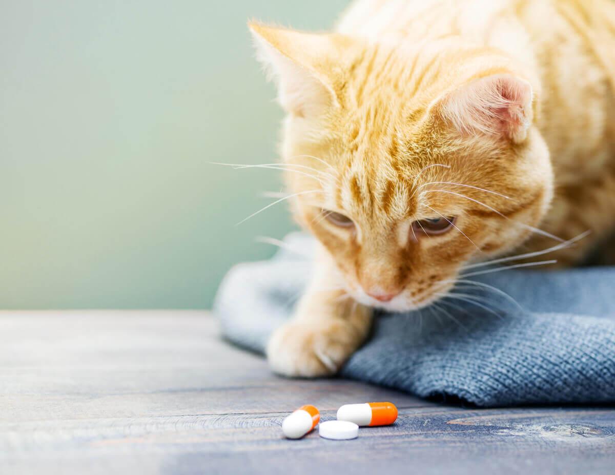 A depressão em gatos pode ser tratada com medicamentos.