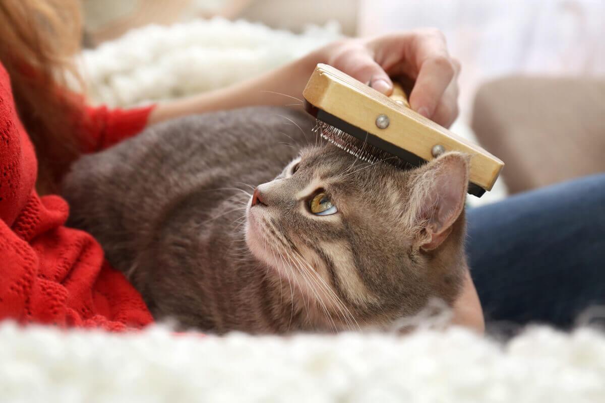 Escovação para cuidar da pele dos gatos.