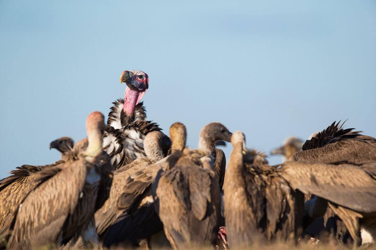 Abutres: animais decompositores.