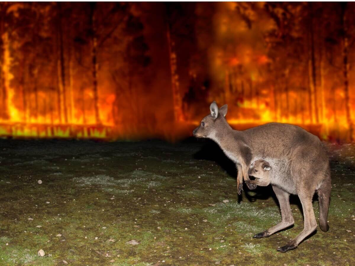 Um incêndio na Austrália.