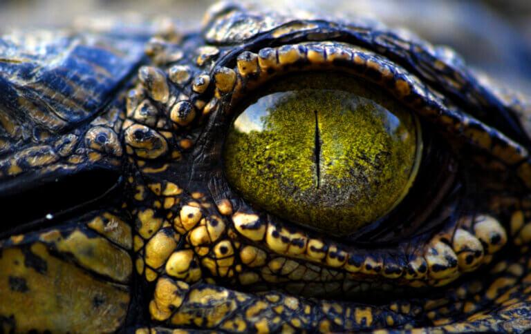 9 tipos de crocodilos