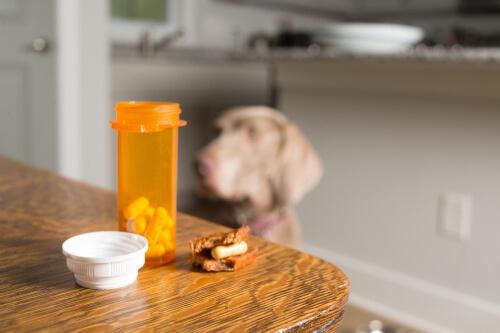 Os 7 efeitos secundários da cortisona em cães