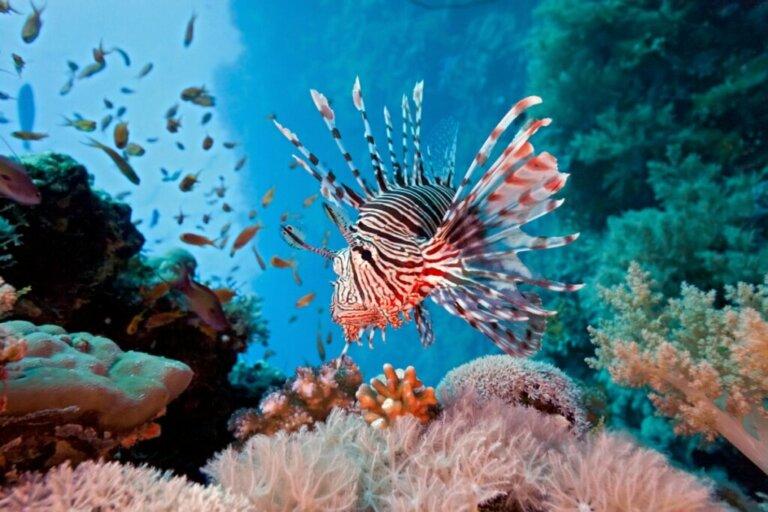 Os 12 peixes mais perigosos do mundo
