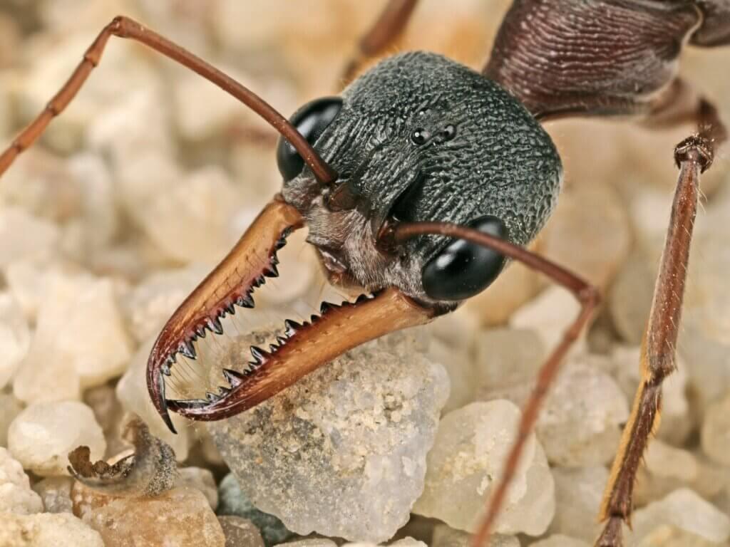 Qual é a importância das formigas nos ecossistemas?