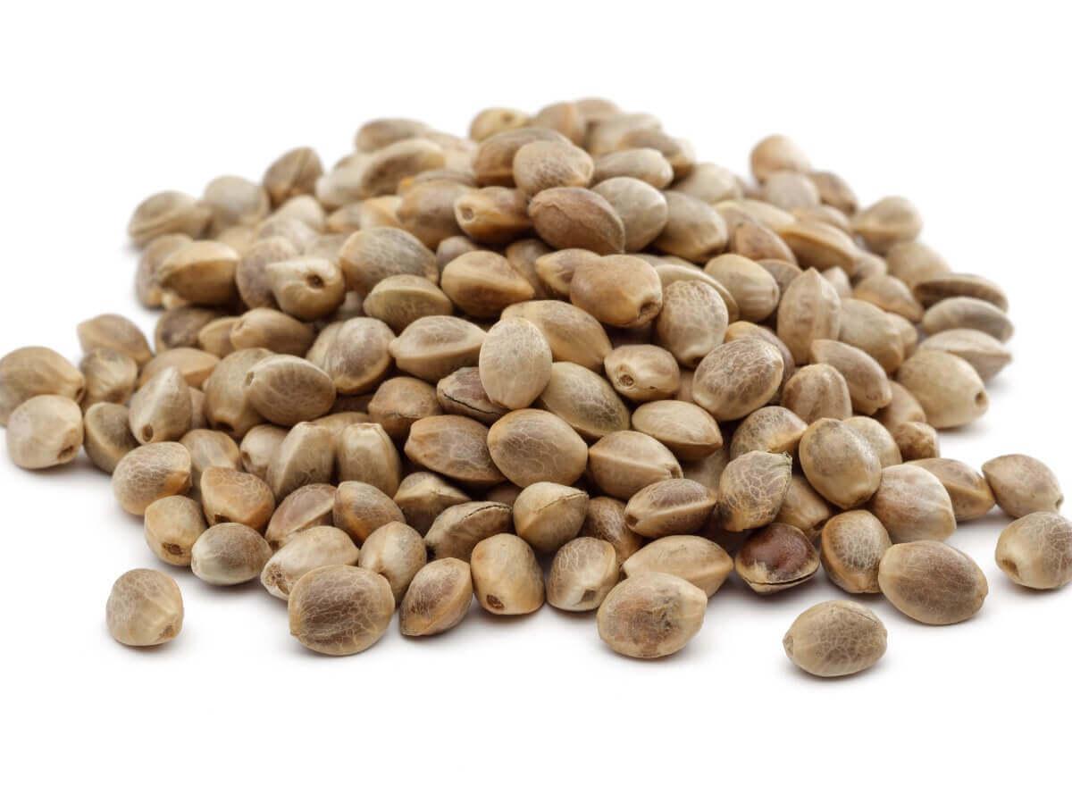 As sementes de cânhamo são boas para animais de estimação?