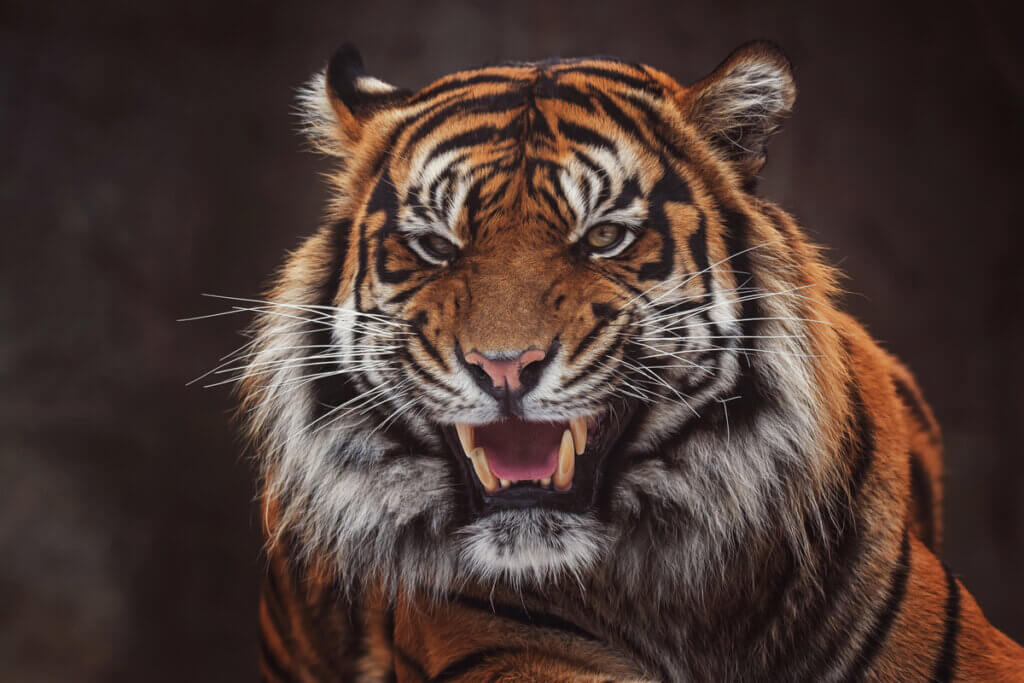 8 mamíferos ameaçados de extinção