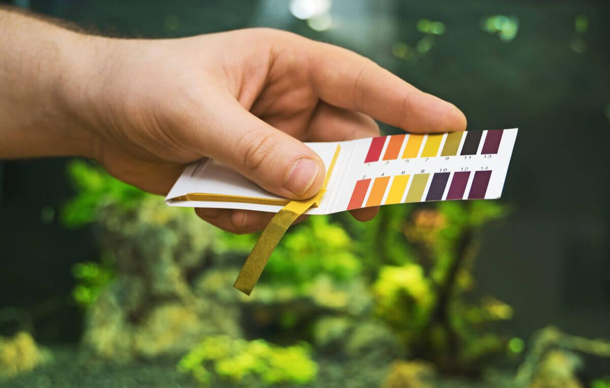 Uma faixa de pH no aquário.