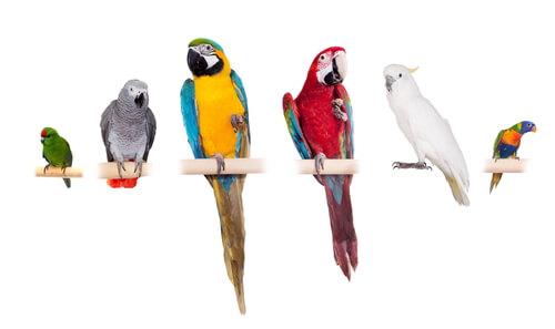 Os papagaios são companheiros divertidos.