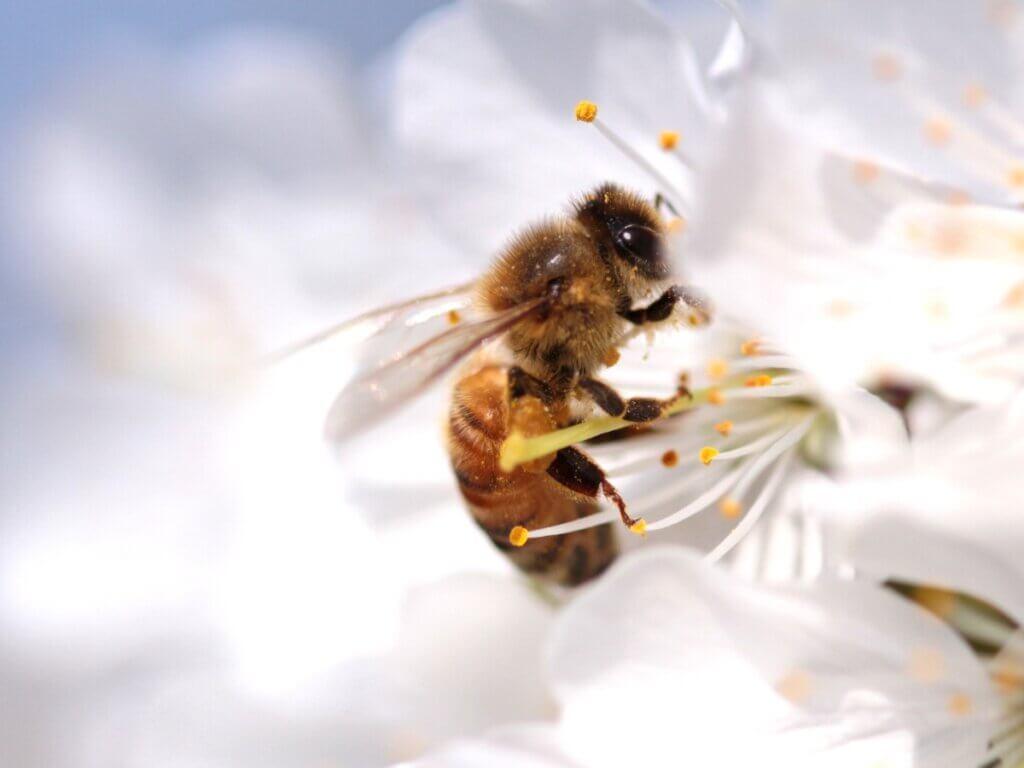 Ciclo de vida das abelhas