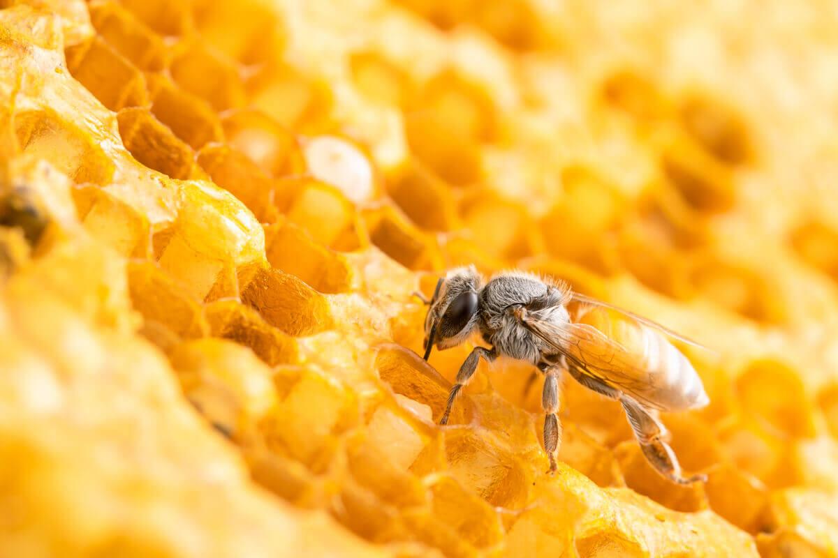 Colmeias de abelhas grandes.