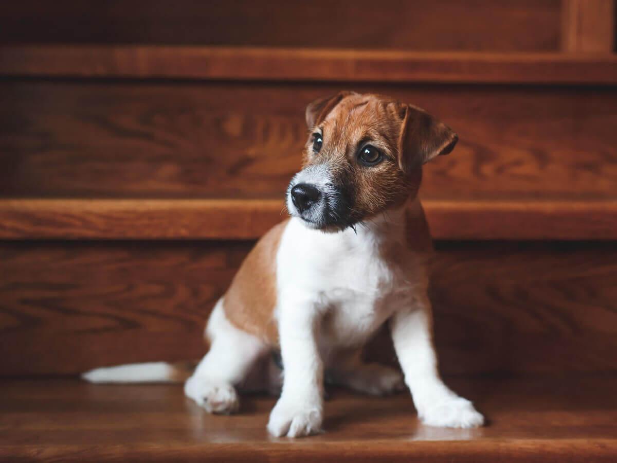 Um cachorro sentado no meio da escada.