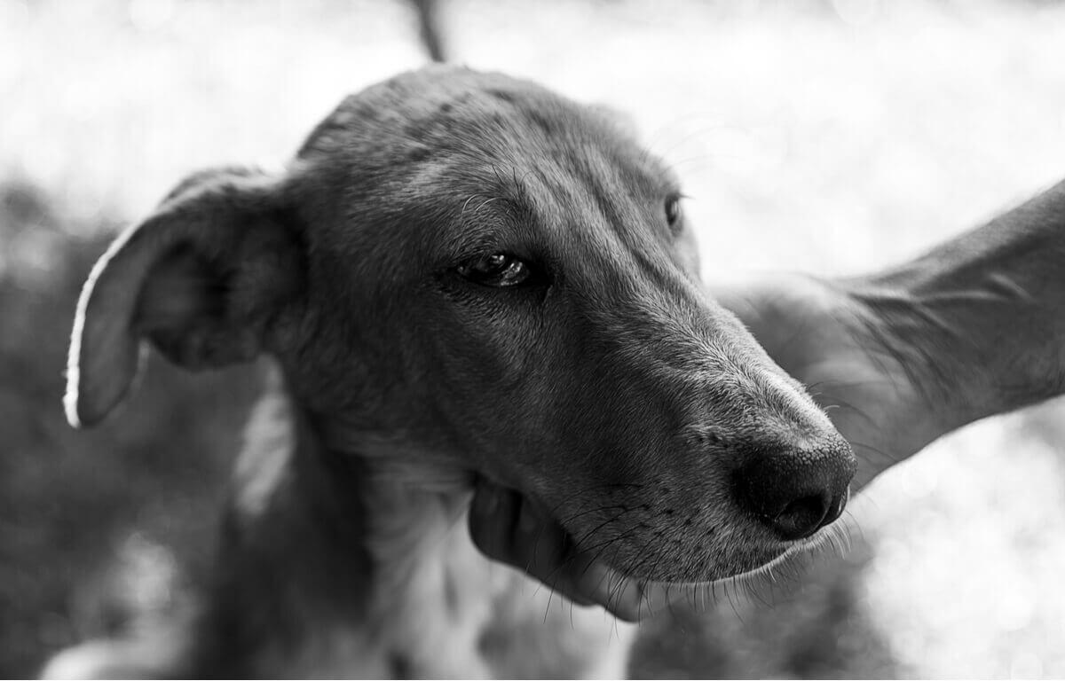 Um cachorro triste em preto e branco.