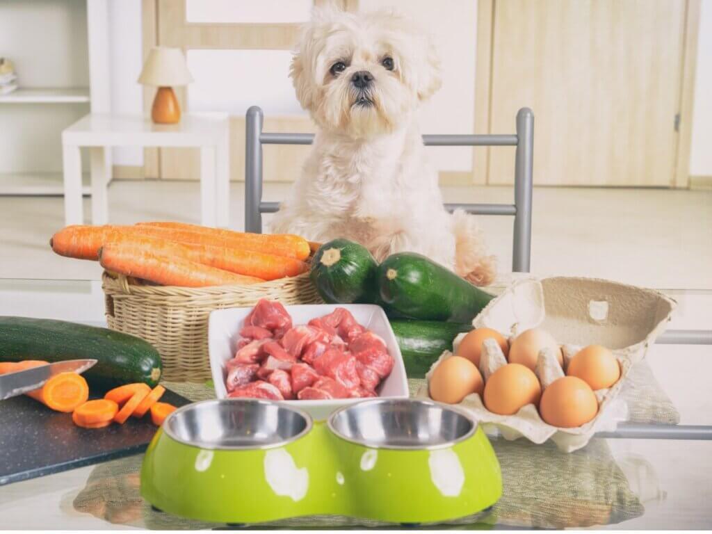 5 alimentos saudáveis para cães