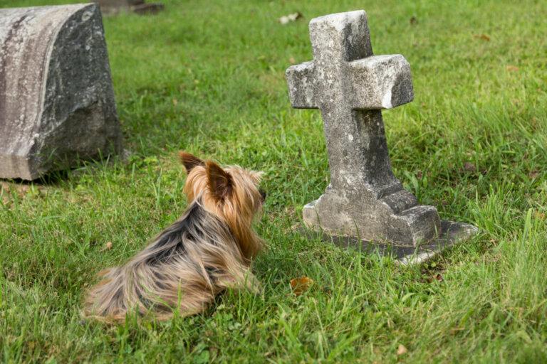 10 sinais de que um cachorro vai morrer