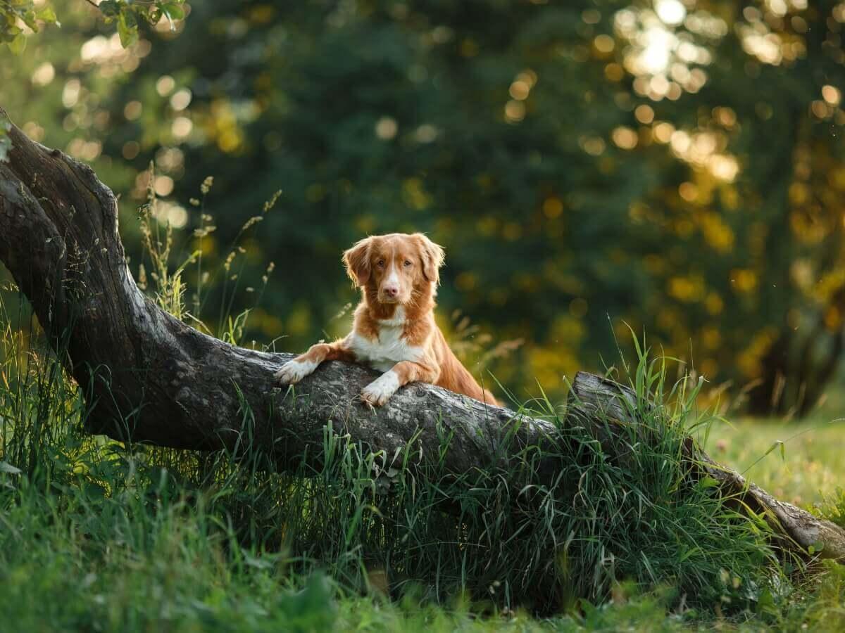 Um cachorro em cima de um tronco.
