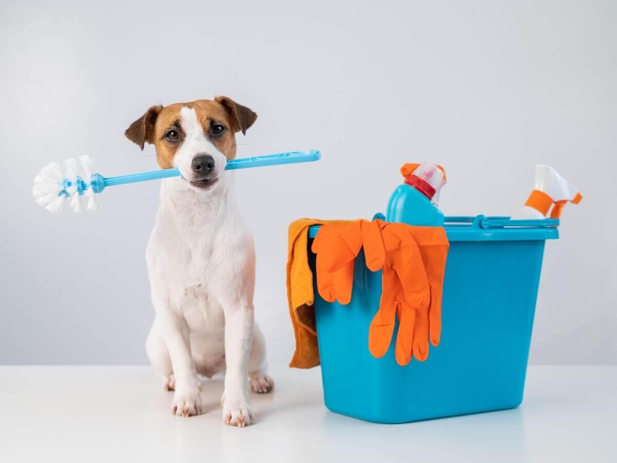 Um cachorro perto de produtos de limpeza.