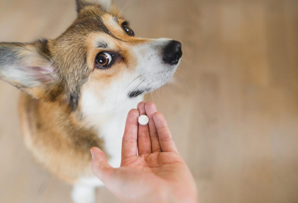 Nolotil para cães: usos e dosagem