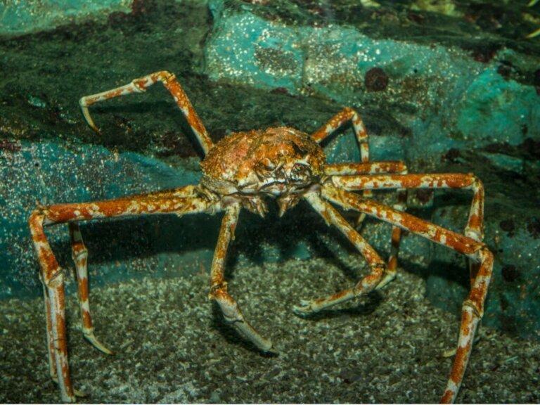 Os caranguejos do mar de Bering: tipos e pesca