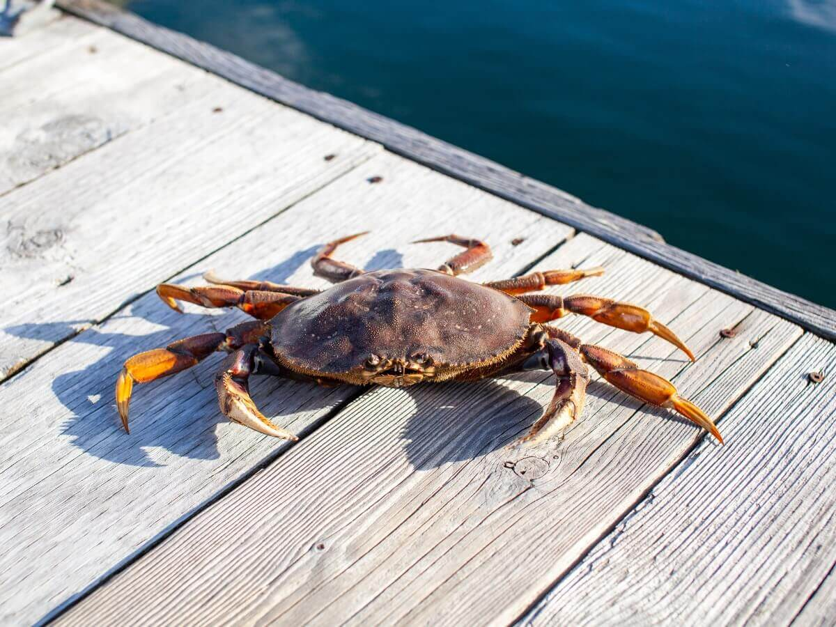 Um dos caranguejos do mar de Bering.