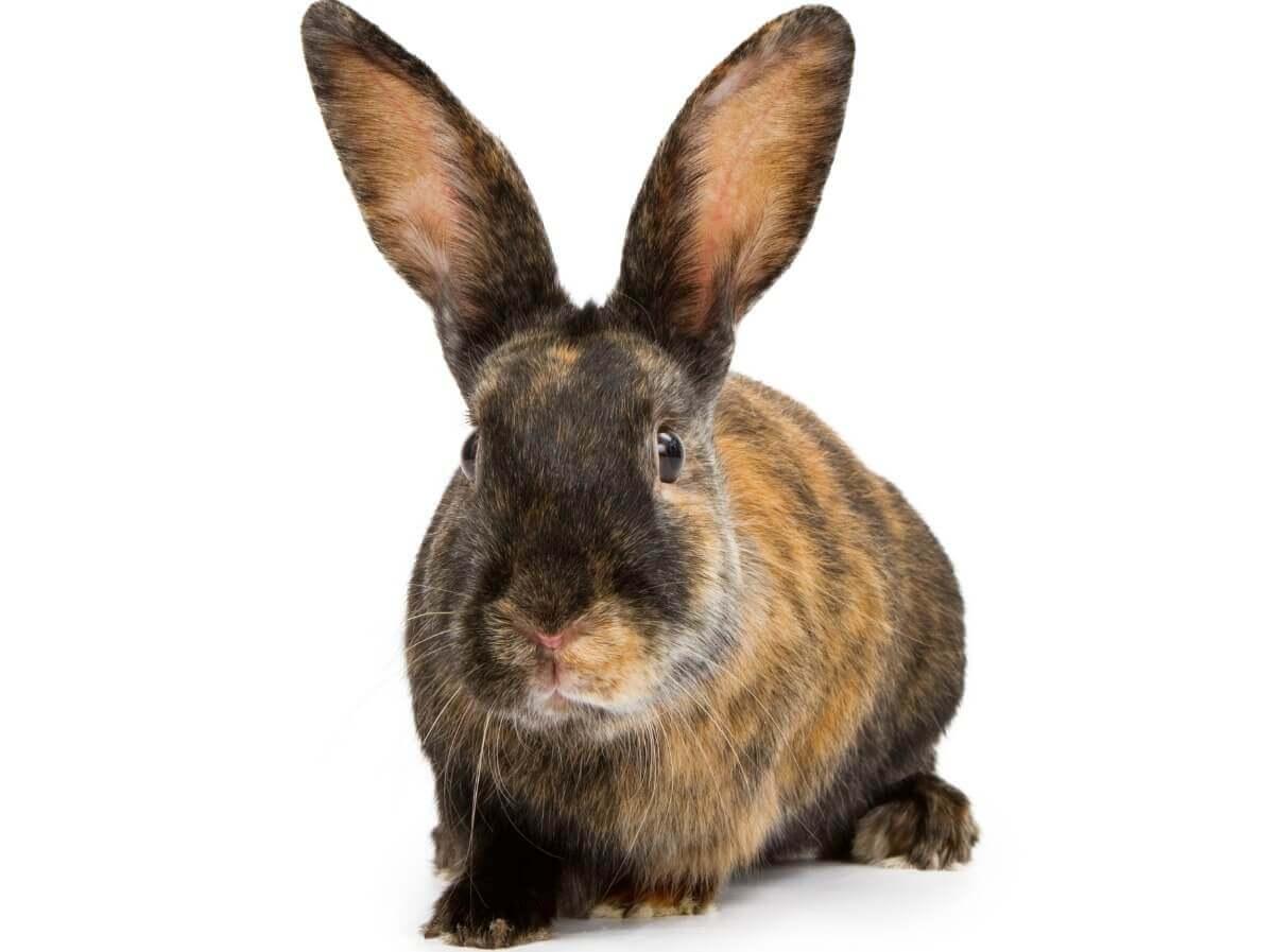 O comportamento dos coelhos é muito curioso.