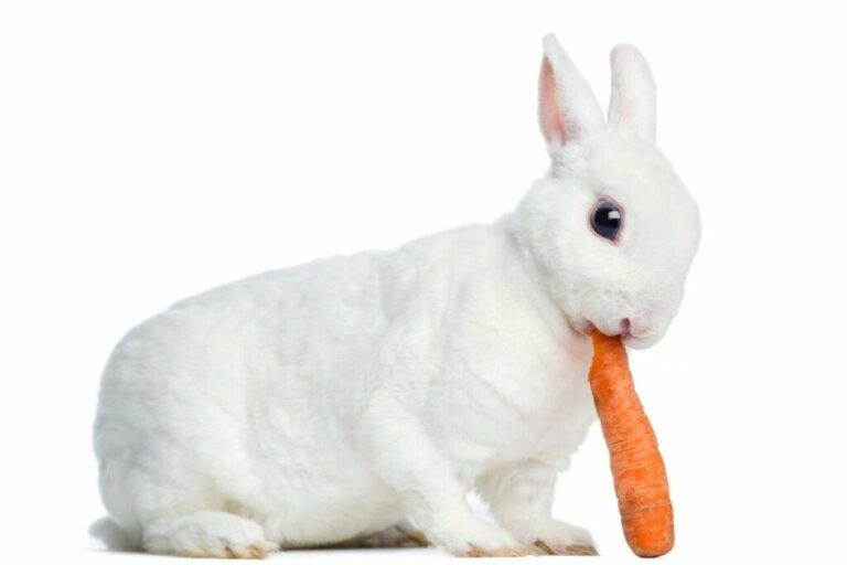 O comportamento dos coelhos
