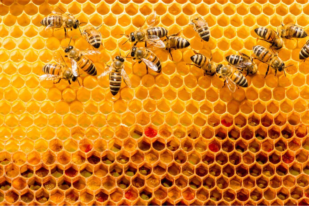 Uma abelha em sua colmeia.
