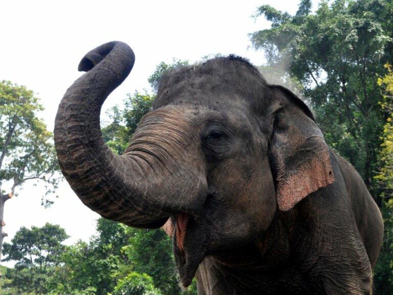 Comportamento dos elefantes