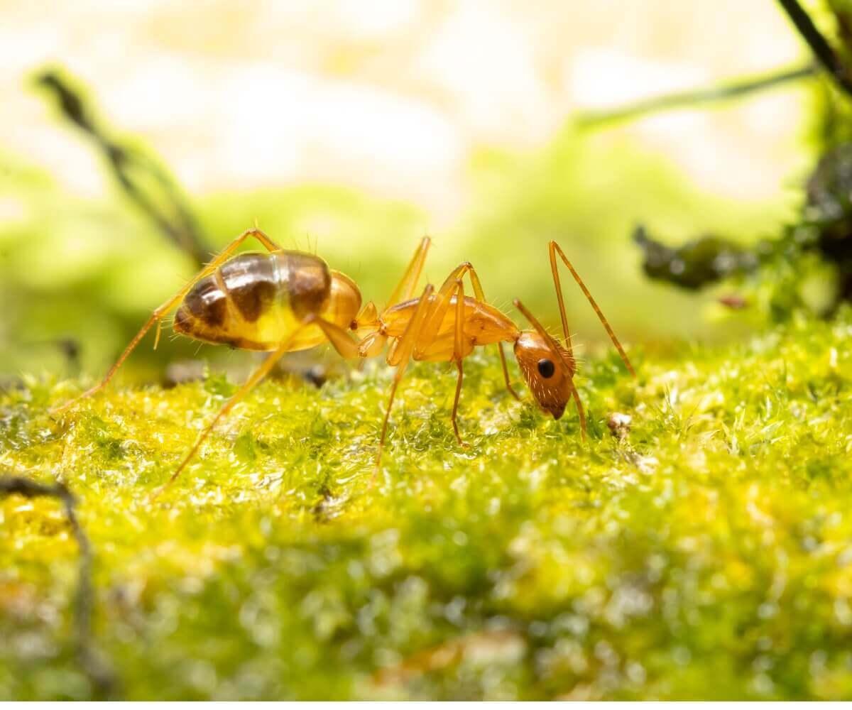 Conheça várias curiosidades sobre as formigas