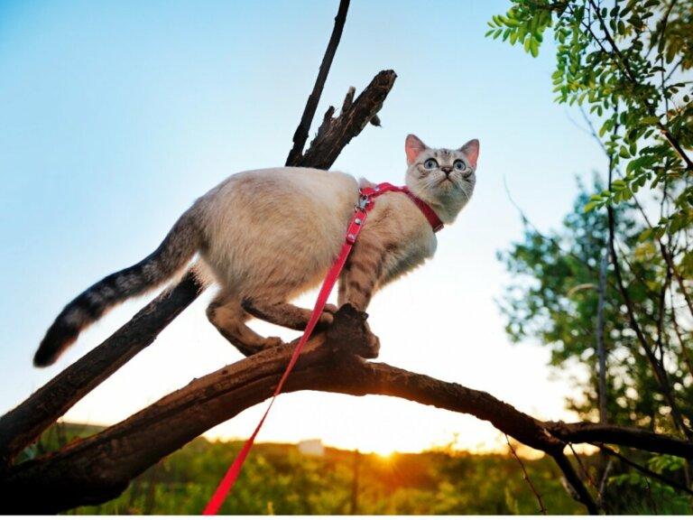 5 dicas para passear com o seu gato