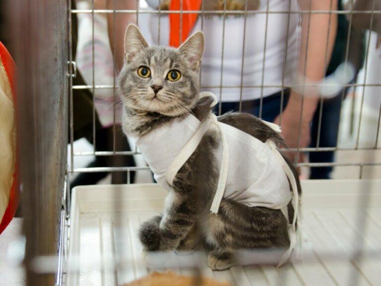 Cuidando de um gato esterilizado