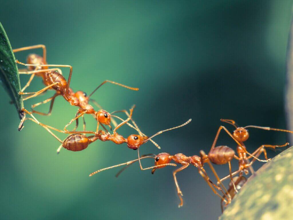 12 curiosidades sobre as formigas