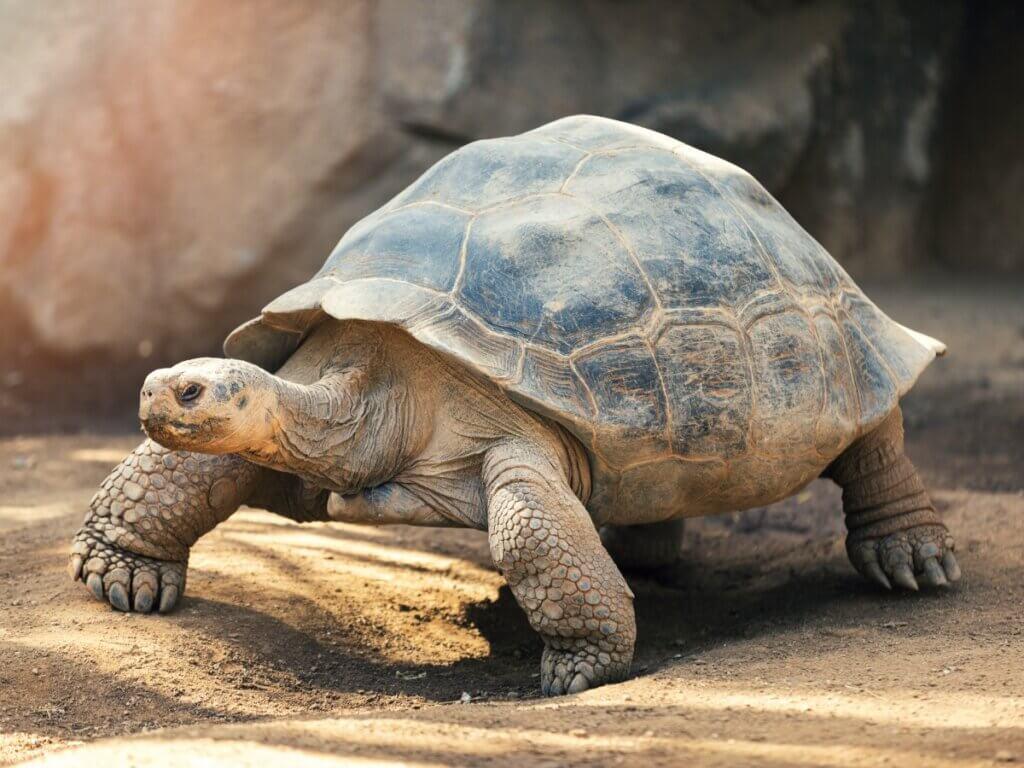 O comportamento das tartarugas