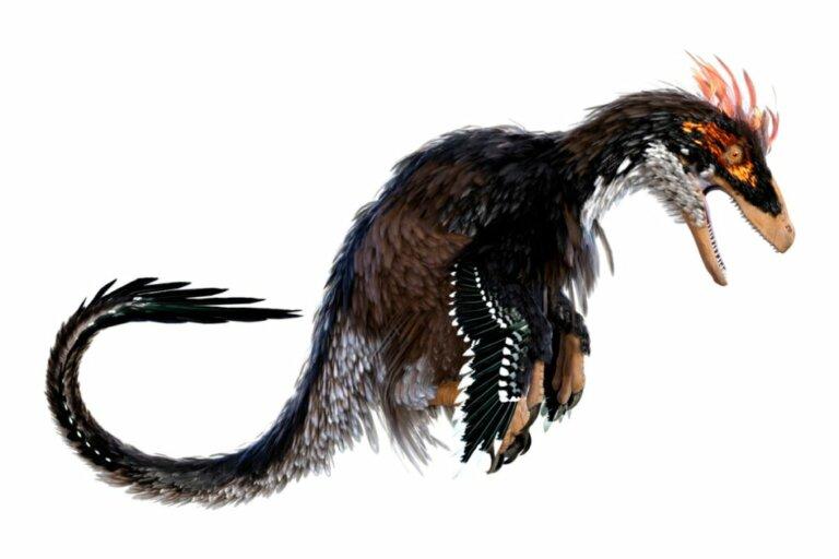 Ubirajara jubatus: o dinossauro com juba