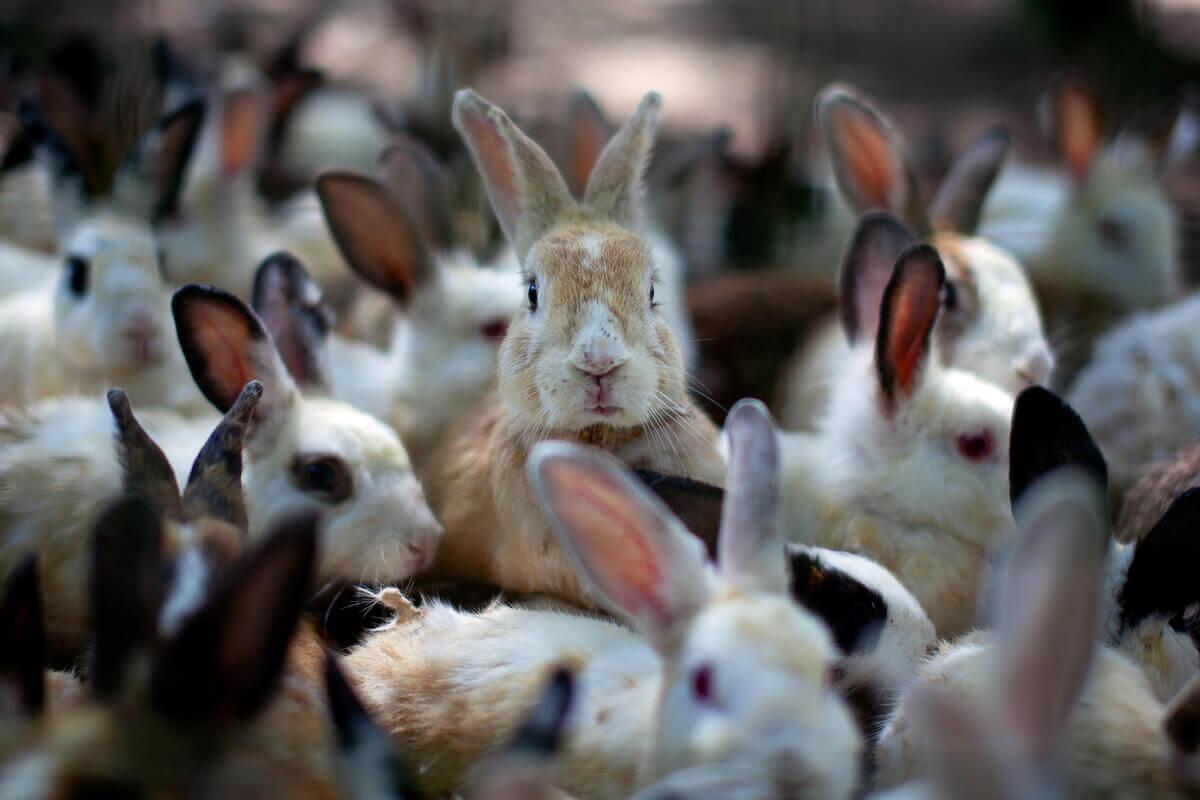 O comportamento dos coelhos pode ser fascinante.