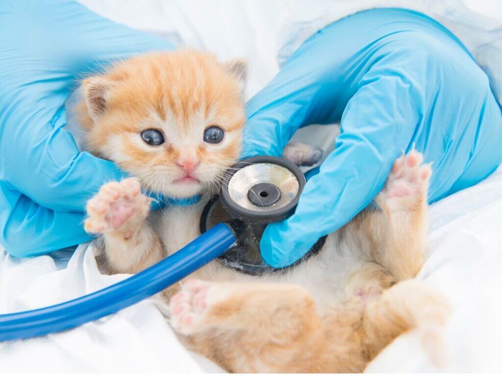 Giardíase em gatos: sintomas, infecção e tratamentos