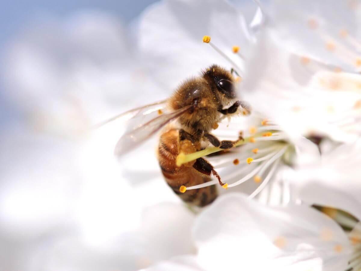 O ciclo de vida das abelhas é muito complexo.