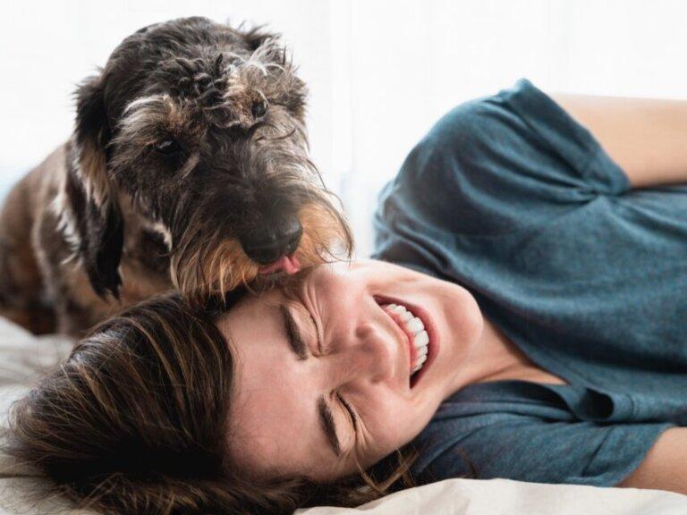 As 11 raças de cães mais carinhosas