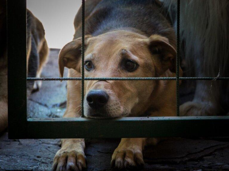 A Coreia do Sul combate os maus-tratos e o abandono ao conceder status legal aos animais