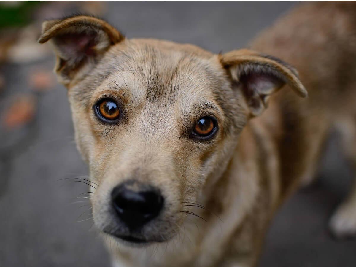 Os dados sobre o abandono de cães são devastadores.
